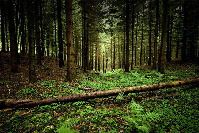 Into The Forest by DREAMCA7CHER.jpg