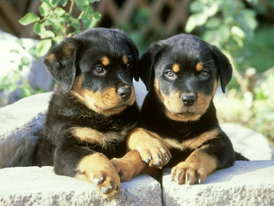 Pets/Clara's dogs