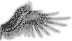 Wing 2.png