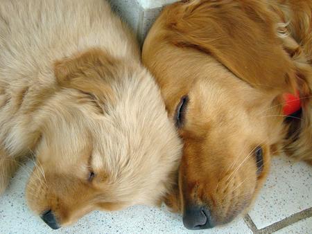 Pets/Julia's Dogs