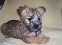 Horaces pup.jpg