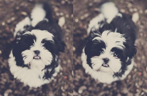 Chloe Clearwater's dog.jpg