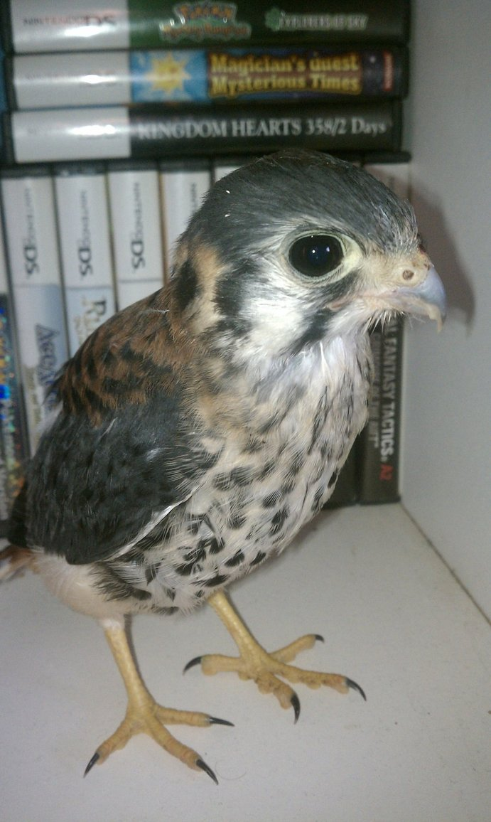 Baby hawk gift from paige.jpg