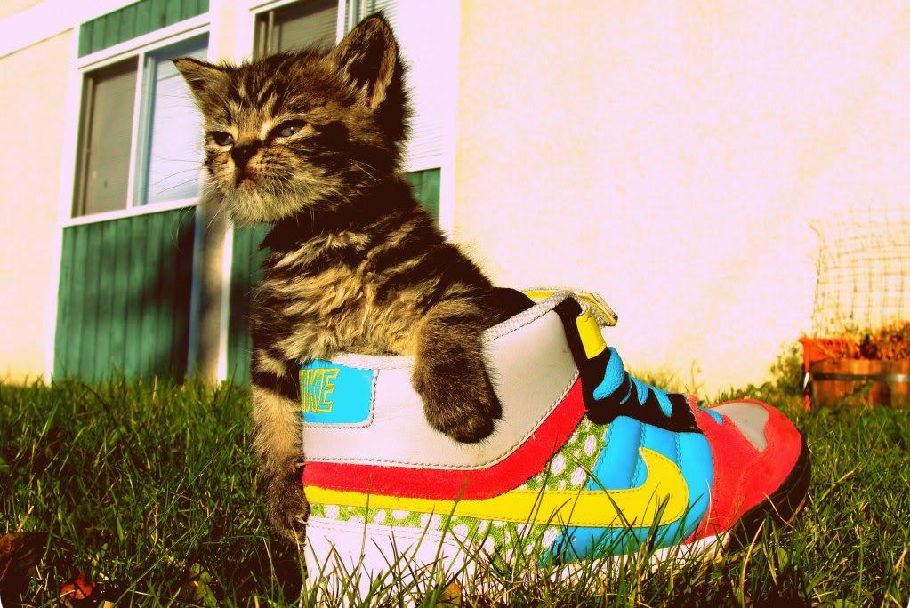 Pets/Skylar's Kitten