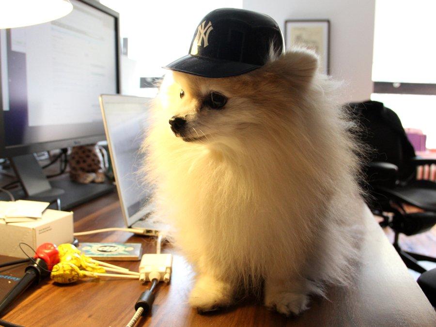 Pets/Trenton's Puppy