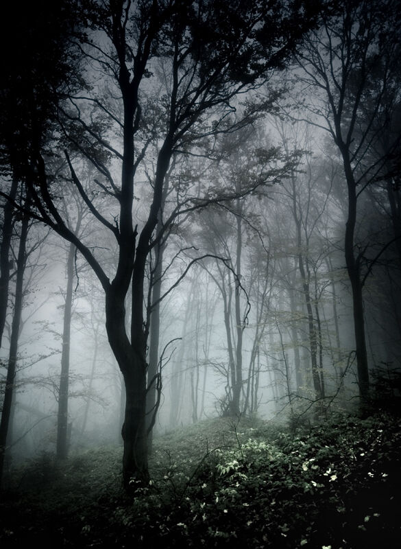 Dark in forest by szuwar.jpg