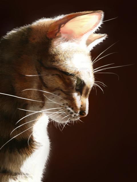 Bengalcat.jpg