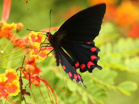 Beautiful-Butterfly5.jpg