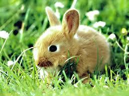 Bunny23.jpg