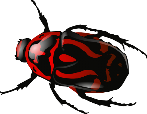Bug-5-500x390.png