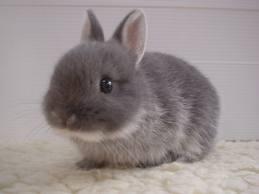 Bunny12.jpg