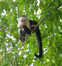 Pets/Takeshi's Spider Monkey