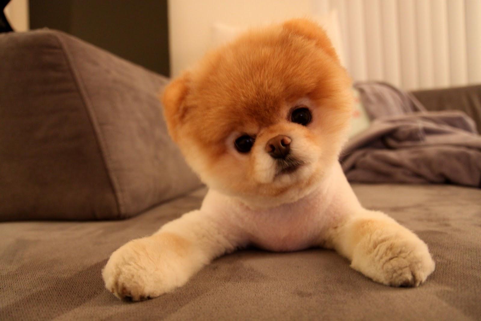 1204-cute-boo-dog.jpg