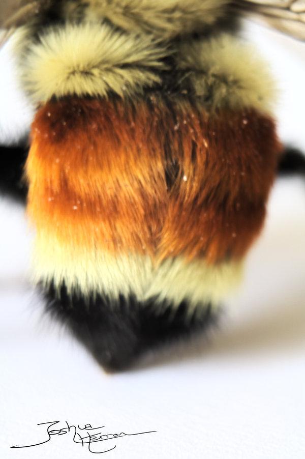 Bee butt by deepsearch-d47ijlf.jpg