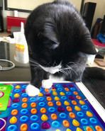 Cat plays candy crush jelly