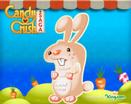Bunny in EP