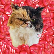 Cat and Red candies