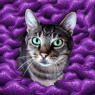 Cat and purple jelly fish
