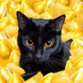 Cat and yellow candies