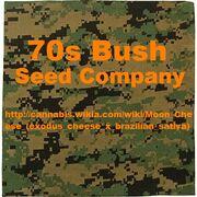 70s bush camouflage.jpg