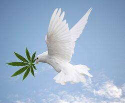 Dove with cannabis.jpg