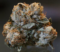 """A close up of a dried """"Bubba Kush"""" flower."""