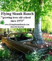 FlyingSkunkRanch.jpg