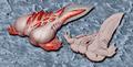Albinoid Tadpole