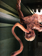 RE2 Licker Ceiling