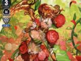 Ranunculus Flower Maiden, Ahsha (V Series)