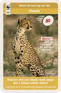 044 cheeta