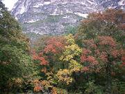 McKittrick Canyon Foliage 2008