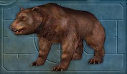 Menu image of Bear