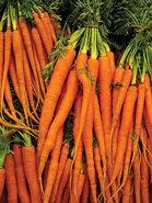 Carrotscarletnantes