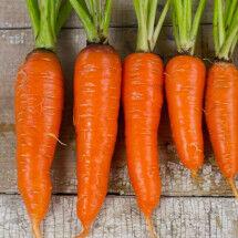 Carrot-kuroda-lg-215x215.jpg