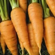 Carrot red core chantenay