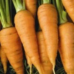 Carrot Galleries