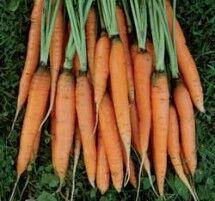 Carrot-scarlet-nantes-lg-215x201.jpg