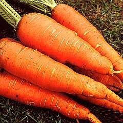 Carrot Autumn King.jpg