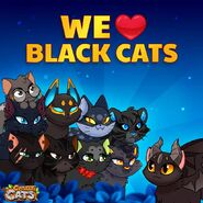 Black Cats Official Image
