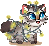 Alice (Charity) Rank 2