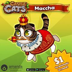 Maccha Charity.jpg