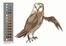 Hectors owl model sheet