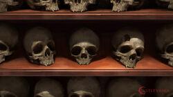Stephen-stark-stark-steve-skulls