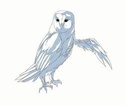 Hectors owl model