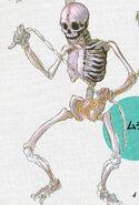 06whipskeleton