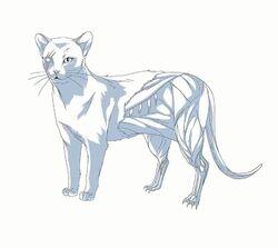 Hectors cat model