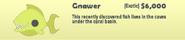 Gnawer