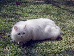Snowycat.jpg