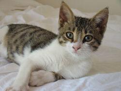 Cyprus Cat.jpg